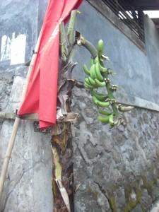 dekorasi di sepanjang gang menuju tempat acara Julang Ngapak Cirendeu