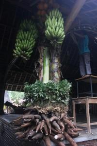 Hasil bumi disusun di tiang berdasarkan tempat tumbuh tanaman tsb pada dekorasi acara Julang Ngapak Kampung Adat Cirendeu