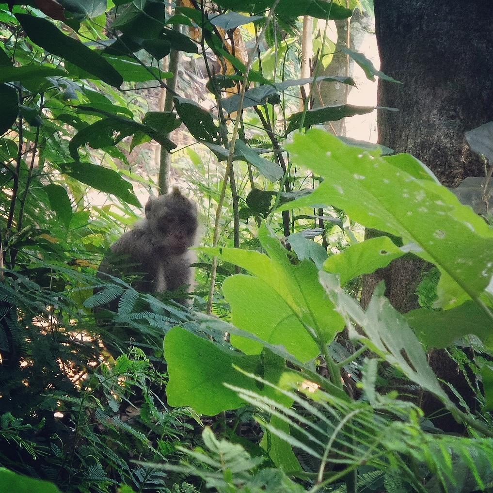 Balada Seekor Monyet