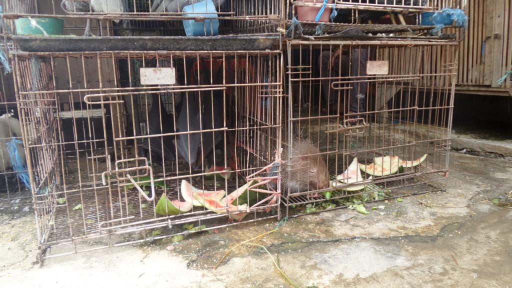Landak dan Kalong di Pasar Burung Sukahaji Bandung - Penjaja Kata