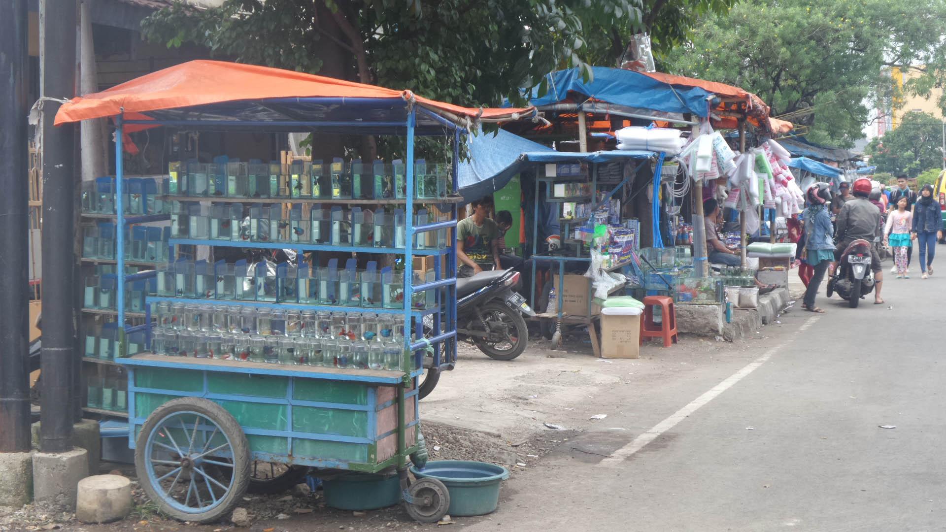 Eksplorasyik Pasar Ikan Hias Muara Bandung