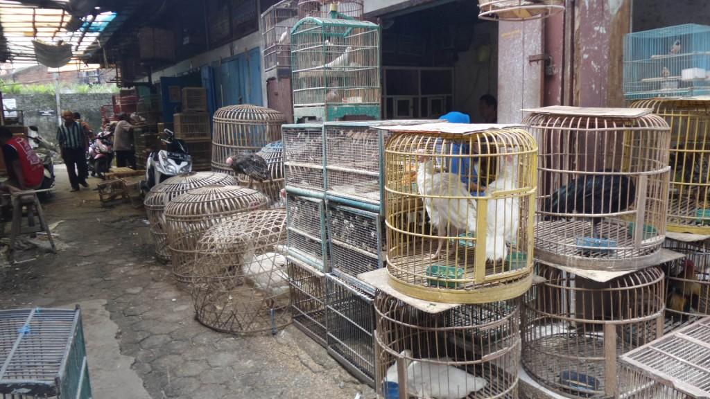 Waspada Penipuan di Pasar Burung Sukahaji Bandung - Penjaja Kata